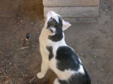 Meowza contimplates a jump